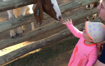 Why we love visiting The Flag Animal Farm